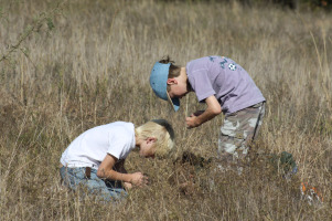 envs Matt grass Prairie Field Trips