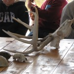 Children examine a deer skull and other animal skulls