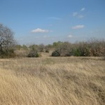 Fall grasses at Sneed Prairie