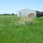 Sneed work shed in tall spring grass