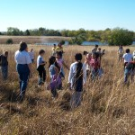 Planting native grass seeds to restore the prairie
