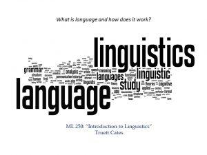 Modern Languages 250