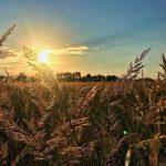 Grass @ Sneed _ ARO (2)