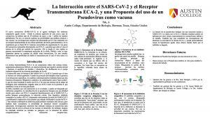 The interaction between SARS-CoV-2 and the ACE-2 Transmembrane Receptor, and a Proposal of the Use of a Pseudovirus as a Vaccine